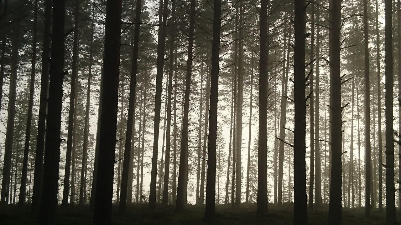 pine-1656829_1280.jpg